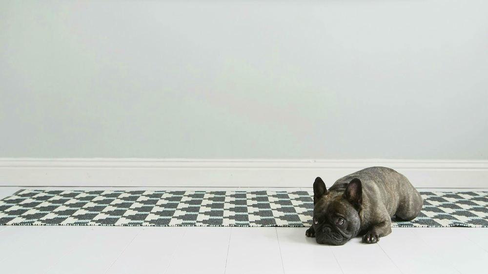 alfombra-a prueba de perros